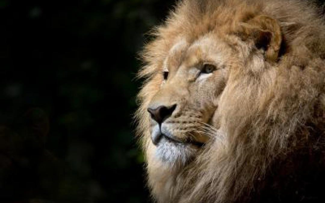 What a lion taught me about focus.